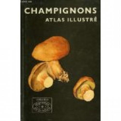 Champignons Altas illustré